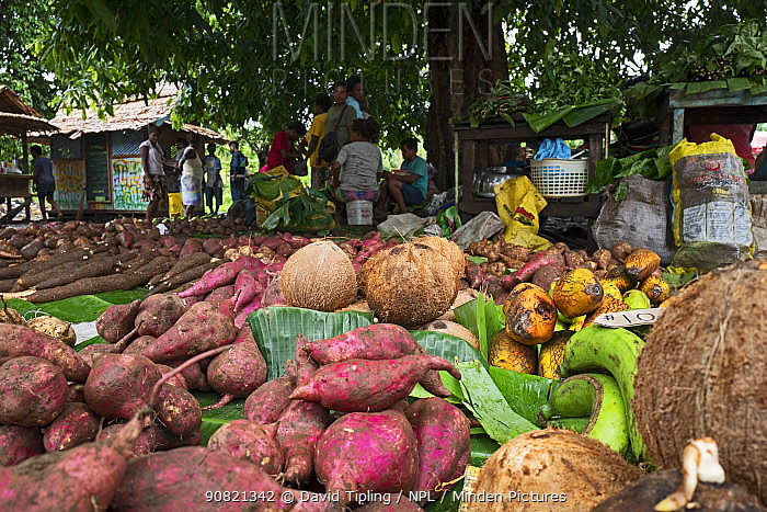 Fruits and vegetables for sale at produce market, includes Banana, Sweet potato, Taro and Kumara. Kirakira, Makira Island, Solomon Islands.
