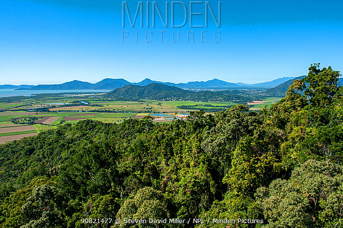 Wet Tropics World Heritage Area, oldest known tropical rainforest on earth. View from Skyrail Rainforest Cableway. Queensland, Australia. 2016.