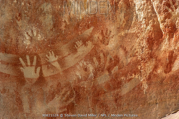 Rock art with stencilled hands and boomerangs. The Art Gallery, 62m of rock with 2000 stencils, engravings and paintings. Baloon Cave, Carnarvon Gorge, Carnarvon National Park, Queensland. 2014.