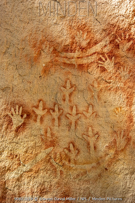 Rock art with stencilled hands, boomerangs and animal footprints . The Art Gallery, 62m of rock with 2000 stencils, engravings and paintings. Baloon Cave, Carnarvon Gorge, Carnarvon National Park, Queensland. 2014.