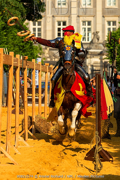 Man dressed as medieval knight riding Pinto horse, collecting rings with sword. Ommegang religious and historical pageant procession, Brussels, Belgium. June 2019.