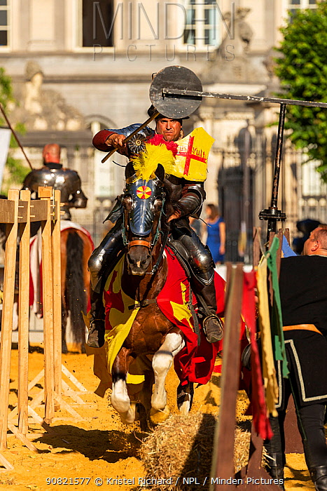 Man dressed as medieval knight riding Pinto stallion, jousting at quintain. Ommegang religious and historical pageant procession, Brussels, Belgium. June 2019.