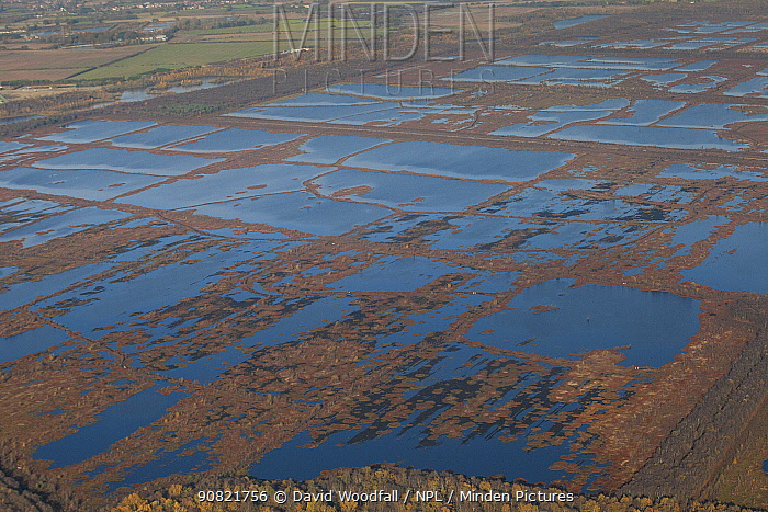 Aerial view of Hatfield Moor National Nature Reserve, rewetted rewilded peatland, managed by Natural England having been used for commercial peat extraction in the past, South Yorkshire, UK. November 2019.