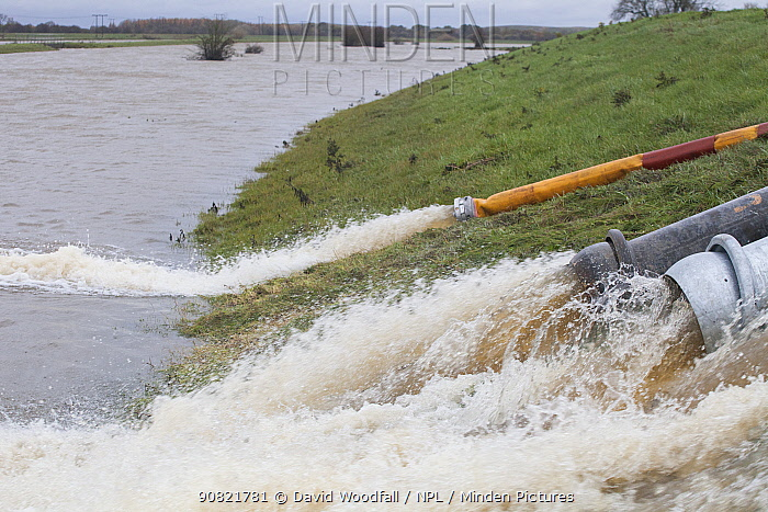 Water being pumped back into the River Don to alleviate flooding from Fishlake, South Yorkshire, UK. November 2019.