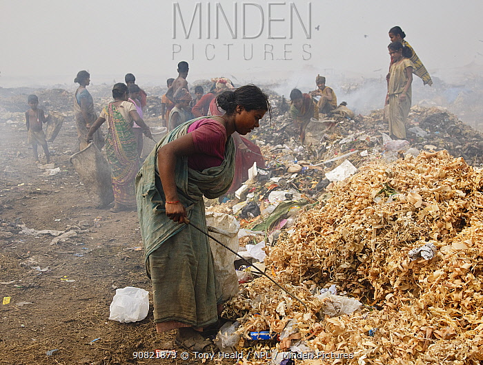 Woman sorting through rubbish on landfill site, many other people in background. Guwahati, Assam, India. 2009.