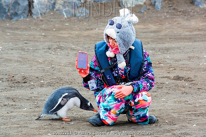 Chinese tourist from Antarctic expedition cruise ship taking selfie with Gentoo penguin (Pygoscelis papua) that has walked up to her. Antarctic Peninsula, Antarctica. February 2019.