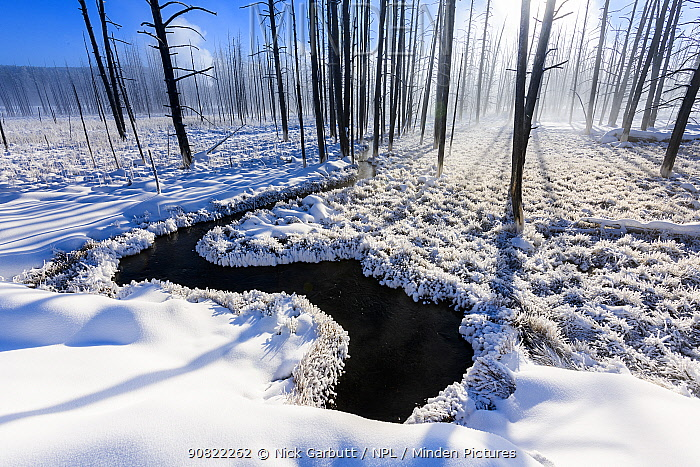 RF - Rays of sunshine through dead tree trunks along winding river, in snow on misty morning. Firehole Valley. Yellowstone National Park, USA. January (This image may be licensed either as rights managed or royalty free.)