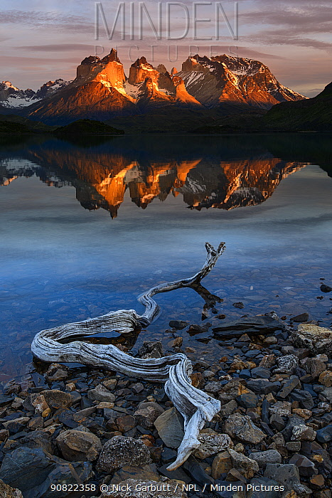 Central Massif and towers of Torres del Paine National Park reflected in Lago Pehoe at sunrise, driftwood on shore in foreground. Patagonia, Chile. November 2018.