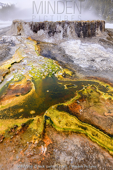 Algal mats in front of Punch Bowl thermal pool. Near Daisy Geyser Basin, Yellowstone National Park, USA.