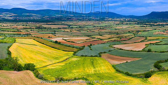 Patchwork of agricultural fields including Oilseed rape (Brassica napus) with hills in background, high angle view. Cuestahedo, Merindad de Montija, Burgos, Castile and Leon, Spain. June 2019.