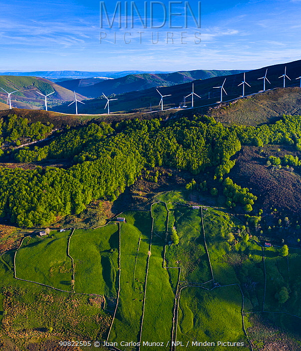 Wind turbines on ridge of hill, Beech (Fagus sp) forest and fields bordered by stone walls on hillside below. Aerial view in evening light. Portillo de la Sia, Soba Valley, Valles Pasiegos, Cantabria, Spain. May 2019.