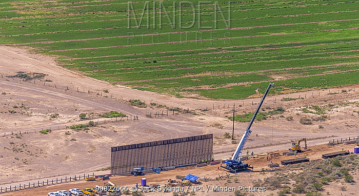Aerial view of construction of the controversial southern border wall between Arizona and Sonora, Mexico. This is being converted from a ten foot wall to a thirty foot high barrier in accordance with President Donald Trump's executive order. Organ Pipe National Monument, Arizona, USA. September 2019. Aerial support by LightHawk.
