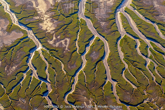 Patterns in the tidal flats of the delta where the delta is swept by tidal encroachment from the Gulf of California. Evidence of the fresh water flow is observable as plant life turns green. Colorado River Delta, Baja California, Mexico. September 2019. Aerial support by LightHawk.
