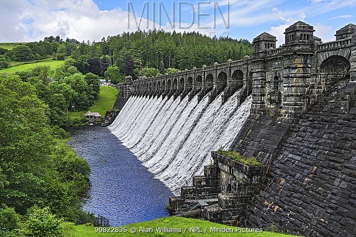 Dam of Lake Vyrnwy reservoir, water flowing down dam wall following heavy rainfall, surrounded by forest. Llanwddyn, Montgomeryshire, Powys, Wales, UK. June 2019.
