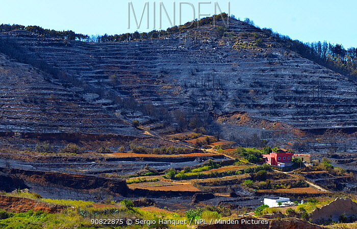 Charred hillside and habitat destruction caused by forest fire. Erjos, Tenerife, Canary Islands.