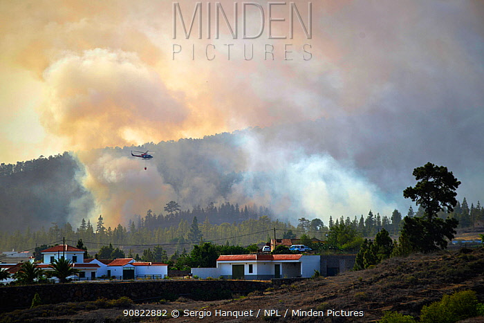 Helicopter flying through clouds of smoke from Canary Island pine (Pinus canariensis) forest fire, houses in foreground. Ifonche, Tenerife, Canary Islands, 2012.