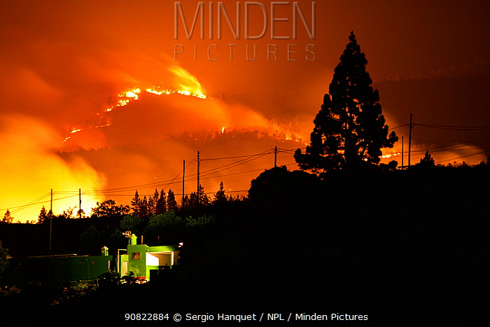 Electricity wires and Canary Island pine forest (Pinus canariensis) silhouetted by forest fire. Ifonche, Tenerife. Canary Islands, 2012.