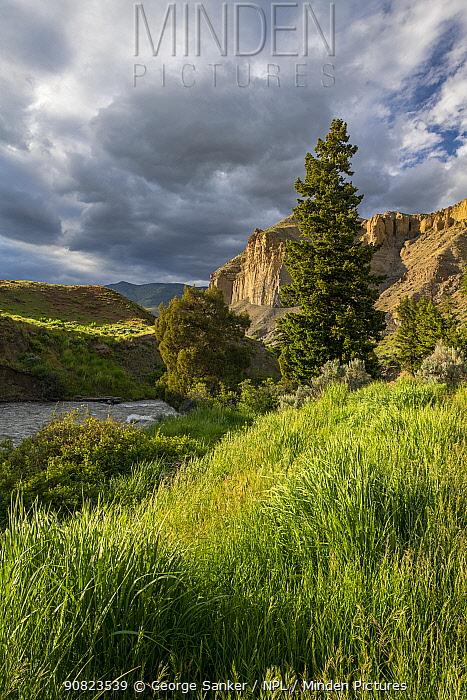Grassland beside Gardiner River, in evening light. Yellowstone National Park, Wyoming, USA. June 2018.