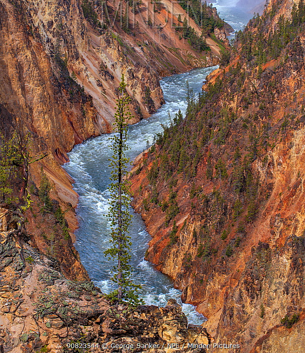 Yellowstone River flowing through Grand Canyon of Yellowstone, Yellowstone National Park, Wyoming, USA. June 2018.