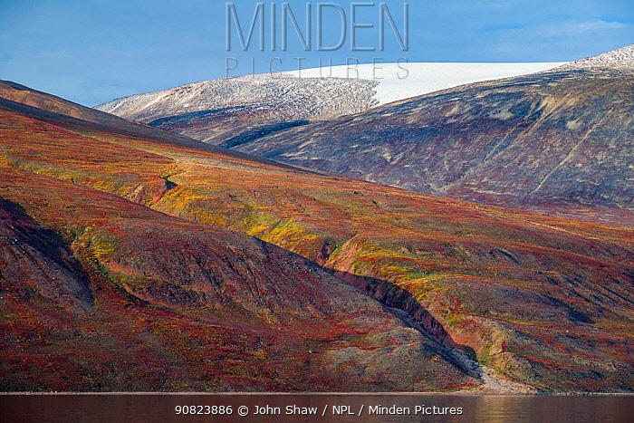 Autumn tundra colors on the hills in Rode Fjord (Red Fjord), Scoresby Sund, Greenland, August.