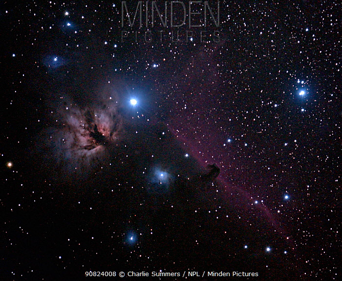 Flame Nebula (NGC 2024) in the Orion Constellation with the Horsehead Nebula to the right.  This image was taken on October 7, 2013 from eastern Colorado, USA, with digital focus stacking.