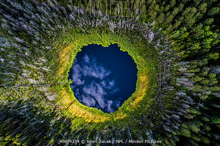 Aerial view of a small forest lake in Karula National Park, Valgamaa county, Southern Estonia. Highly commended in the Wildlife Photographer of the Year Awards 2019.
