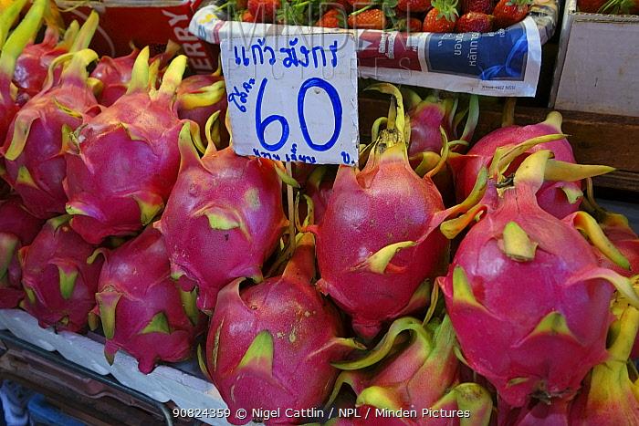 Dragon fruit (Hylocereus undatus) on stall at food market, Bangkok, Thailand. 2015.