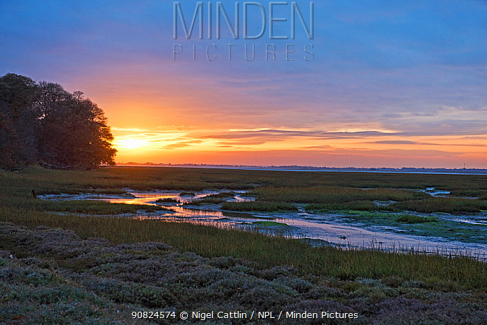 Mudflats of Chichester Channel at low tide, at sunset. Itchenor, West Sussex. November 2016.