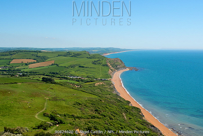 View from Golden Cap, looking east across National Trust land to Seatown, West Bay and Chesil Beach. Jurassic Coast, Dorset, England, UK. May.