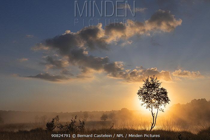 Sun shining through tree at dawn. Klein Schietveld, Brasschaat, Belgium. July 2019.