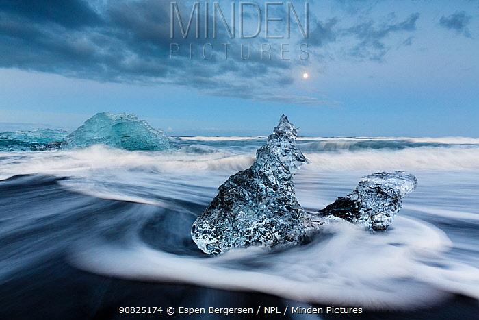 Ice sculptures on black beach. Jokulsarlon Glacier, Iceland 2016