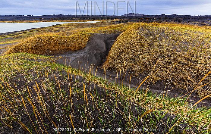 Black sand landscape, Reykjanes, Iceland, May.