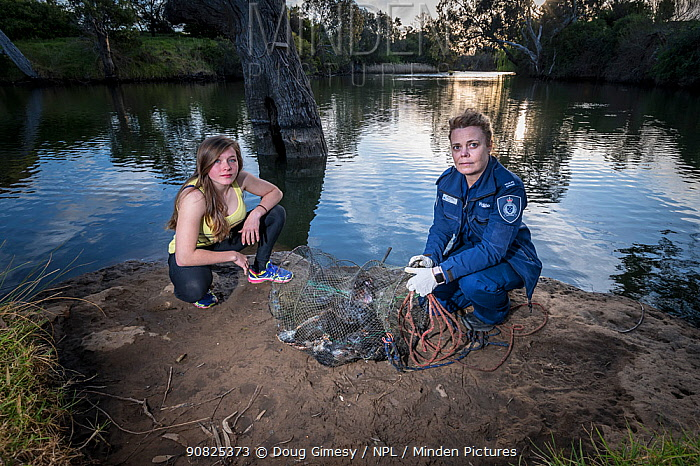 Wildlife Officer in front of an illegally used Opera House net with seven dead platypus (Ornithorhynchus anatinus) which drowned inside. Werribee River, Victoria, Australia. September 2018. Model released.
