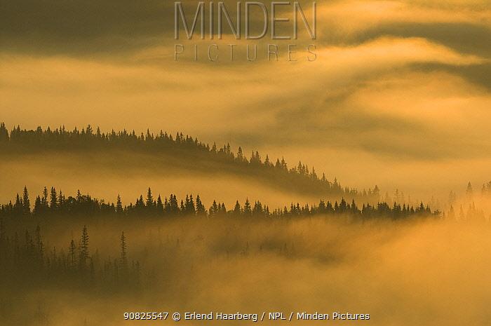 Morning mist over Spruce forest, Hattfjelldal, Helgeland, Nordland, Norway, September 2007