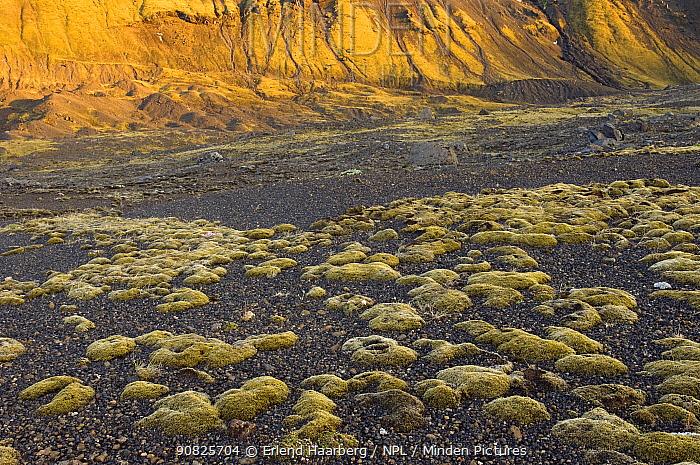 Woolly fringe moss (Racomitrium lanuginosum) near the Markarfljotsgljufur Canyon, Thorsmork, Iceland, June 2008