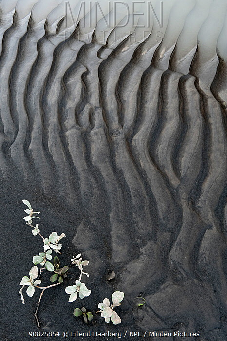 Abstract patterns of mud by the river Jokulsa a Fjollum, Iceland, August 2010