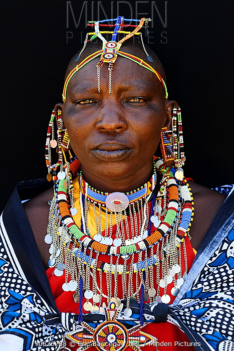 Maasai woman adorned with traditional bead work and colour glass perls around her neck, head portrait. Masai Mara National Reserve, Kenya.