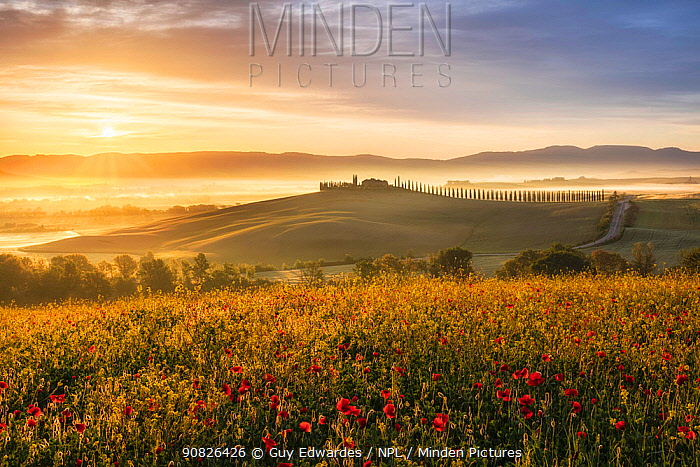 Sunrise over the Val d'Orcia, with Field poppies (Papaver rhoeas) Tuscany, Italy, May.