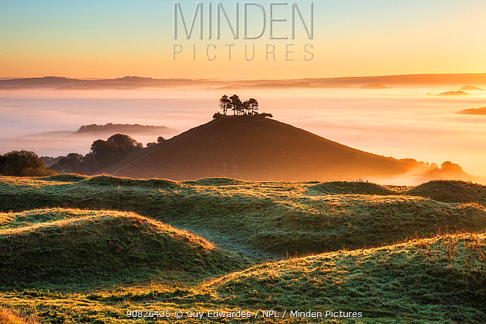 Colmer's Hill, Bridport, Dorset, England, UK, September.
