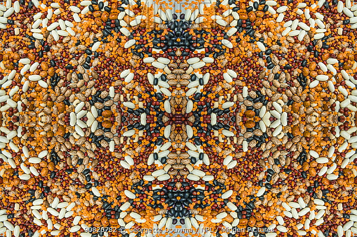 Kaleidoscopic image of a variety of pulses.