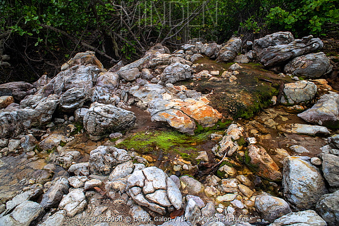 Cold Soufriere, a rare cold volcanic spring. Dominica, Eastern Caribbean. September 2019
