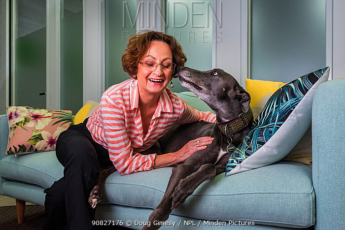 ?Glenys Oogjes, CEO of Animals Australia - one of Australia's most experienced animal advocates - with Blue the Grey', a rescued greyhound, ??March 2017, ?Animals Australia Office, North Melbourne, Victoria, Australia.? Editorial use only.