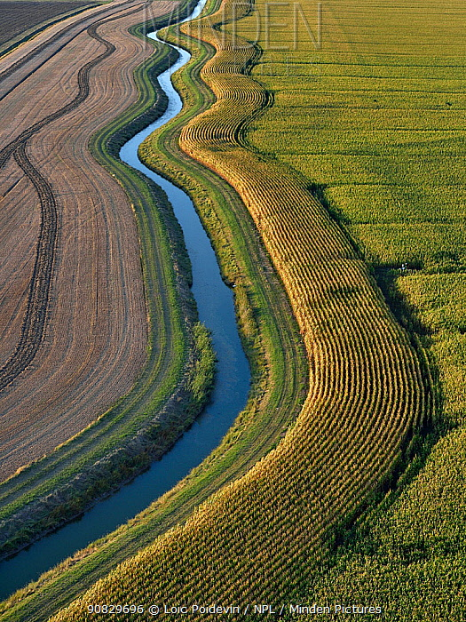 Aerial view of drainage channel in the Marais Poitevin, Vendee, France, August.