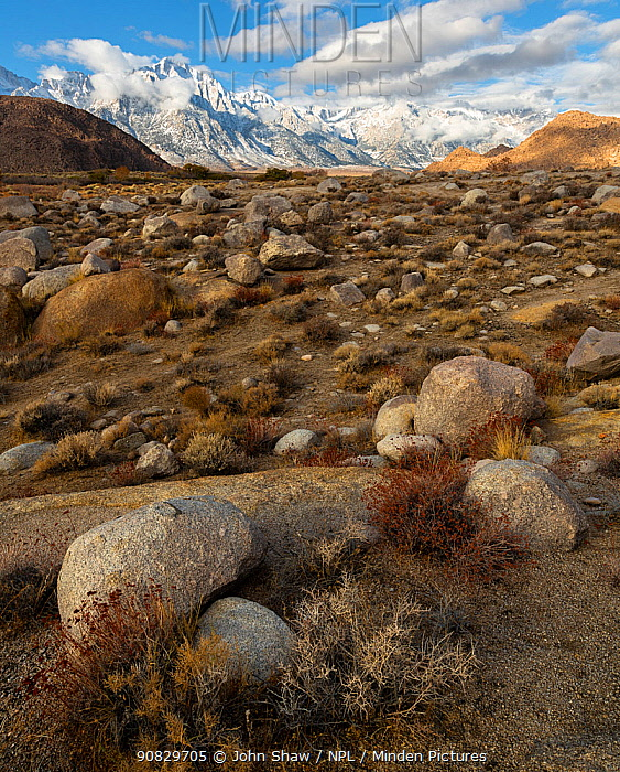 Deeply weathered granite boulders and the snow covered Sierra Nevada Mountains (Lone Pine Peak left of center) in the Alabama Hills, California, USA, November.