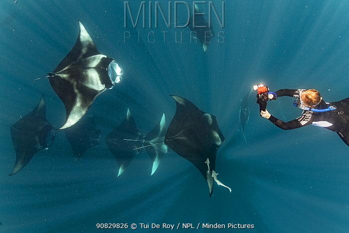 Reef manta rays (Manta alfredi) tourists swimming with mantas filter feeding on plankton, Dhikkurendho Reef, Raa Atoll, Maldives