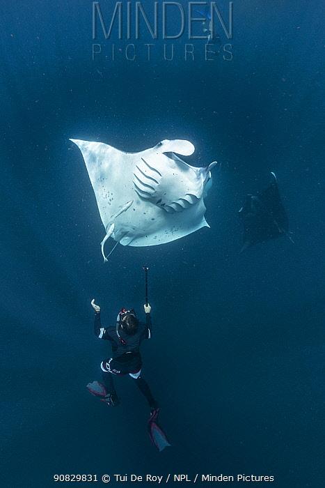 Reef manta ray (Manta alfredi) tourists swimming with mantas filter feeding, Dhikkurendho Reef, Raa Atoll, Maldives