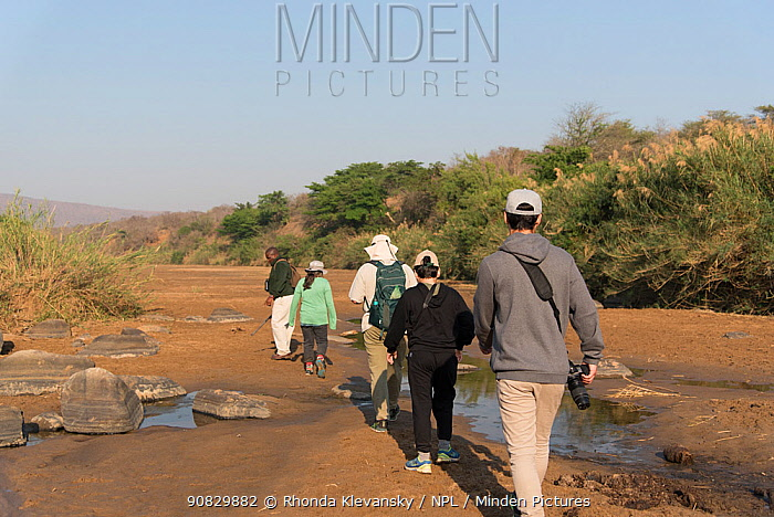 People walking with a game ranger in Hluluwe-Imfolosi Park, Kwazulu Natal, South Africa