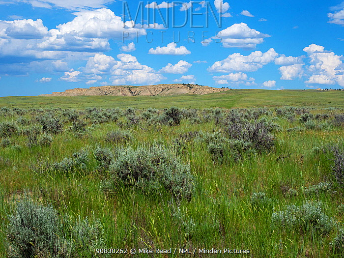 Bluffs and prairie grassland from the I25 north of Casper, Wyoming, USA, July 2019