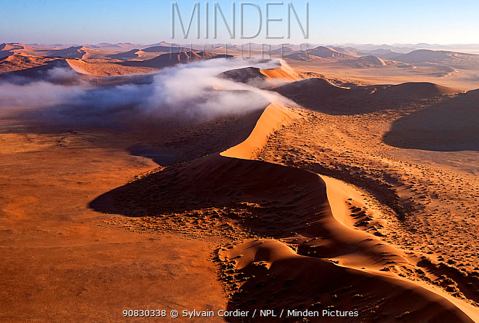 Red Dunes covered in mist, Namib-Naukluft National Park, Namibia, Africa