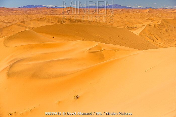 Highest dune of Sossusvlei, Namib desert, Namib Naukluft Park, Namibia, Africa